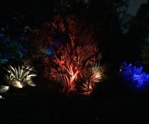 Colorful lighting for Moonlight in the Garden. Photo: Kay Whatley