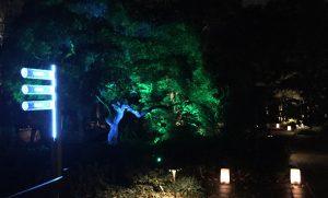 Seuss-like tree? Photo: Kay Whatley