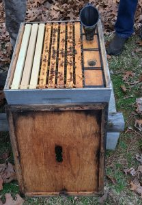Open 5CBA beehive with 5 active brood frames, 3 frames unused (lighter), and funnel for feeding bees sugar water. Photo: Kay Whatley