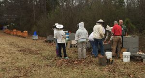 5CBA members check the bee brood in club hives. Brown hives at left set up for members to eventually take home. Photo: Kay Whatley