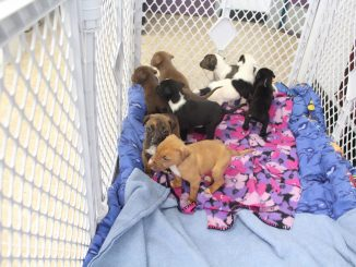 Puppies rescued from cold. Source: Beth Schulman, SPCA of Wake County (NC)