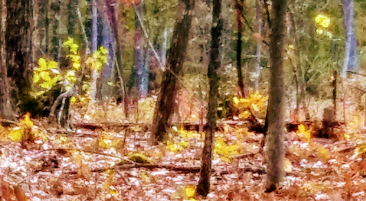 Cropped Bigfoot photo by Bill Humphrey with his phone camera.