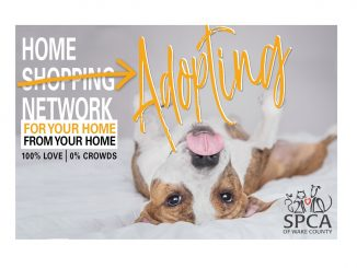 Home Adopting Network. Source: Darci VanderSlik, SPCA of Wake County
