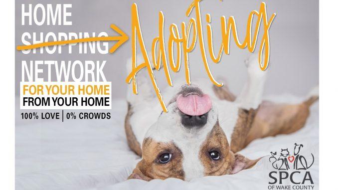 Home Adopting Network. Source: Darci VanderSlik,SPCA of Wake County