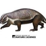 Adalatherium illustration. Source: Denver Museum of Nature & Science