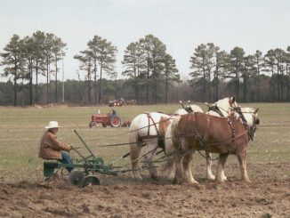 Plow day. Source: Donna Campbell Smith