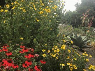 Juniper Level Botanic Garden in bloom. Source: Robert B. Butler