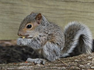 A young squirrel. Photo: Jim Combs