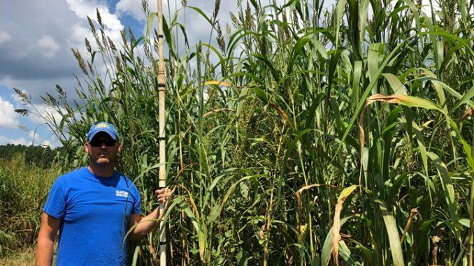 Tall grass maze at Clayton Fear Farm. Source: Boyette Family Farms, Clayton, NC, 2019