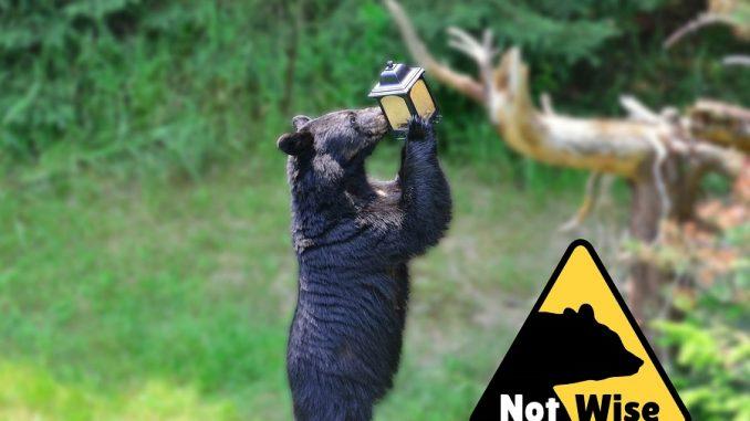 Black Bear with bird feeder. Source: NC Wildlife, photo credit Catherine's Creativity/Shutterstock