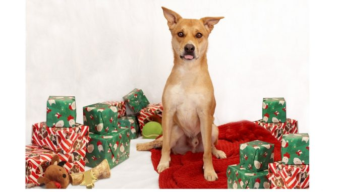 Brahms the dog with holiday gifts. Source: SPCA of Wake County