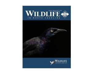"Uncommon grackle, winning photograph by Matt Cuda, Tobaccoville NC, on the cover of ""Wildlife In North Carolina"" Jan/Feb 2021 issue. Source NC Wildlife"