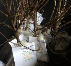 Tree seedlings. Source: Maggie Bailey, WE PLANT it FORWARD