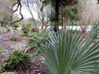 Juniper Level Botanic Garden. Photo courtesy Julie Williams Dixon