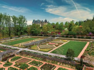 Biltmore Blooms has begun at Biltmore, America's Largest Home. Biltmore Blooms celebrates the return of spring, and the legacy of Frederick Law Olmsted, designer of the estate's gardens and grounds. Tulips across the estate signal the start of the season. Source: Biltmore