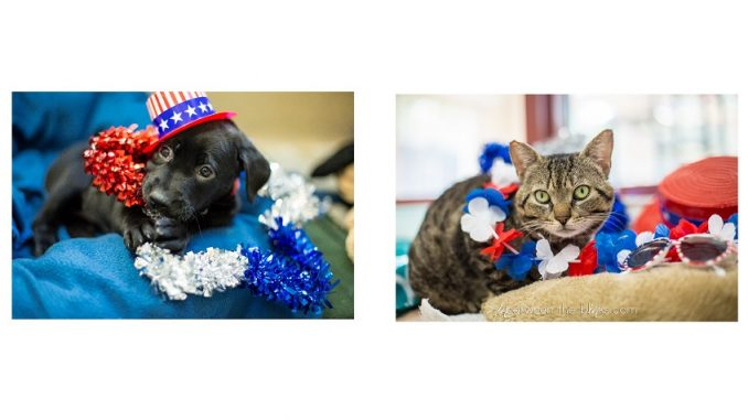 SPCA Wake dog and cat. Photos courtesy InBetween the Blinks