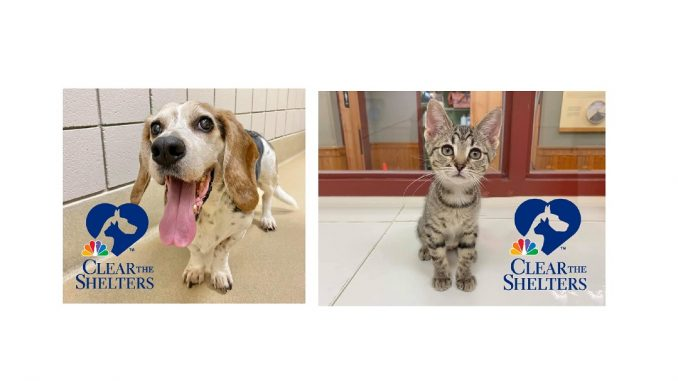 Clear The Shelters 2021 by SPCA Wake. Source: Samantha Ranlet,SPCA of Wake County